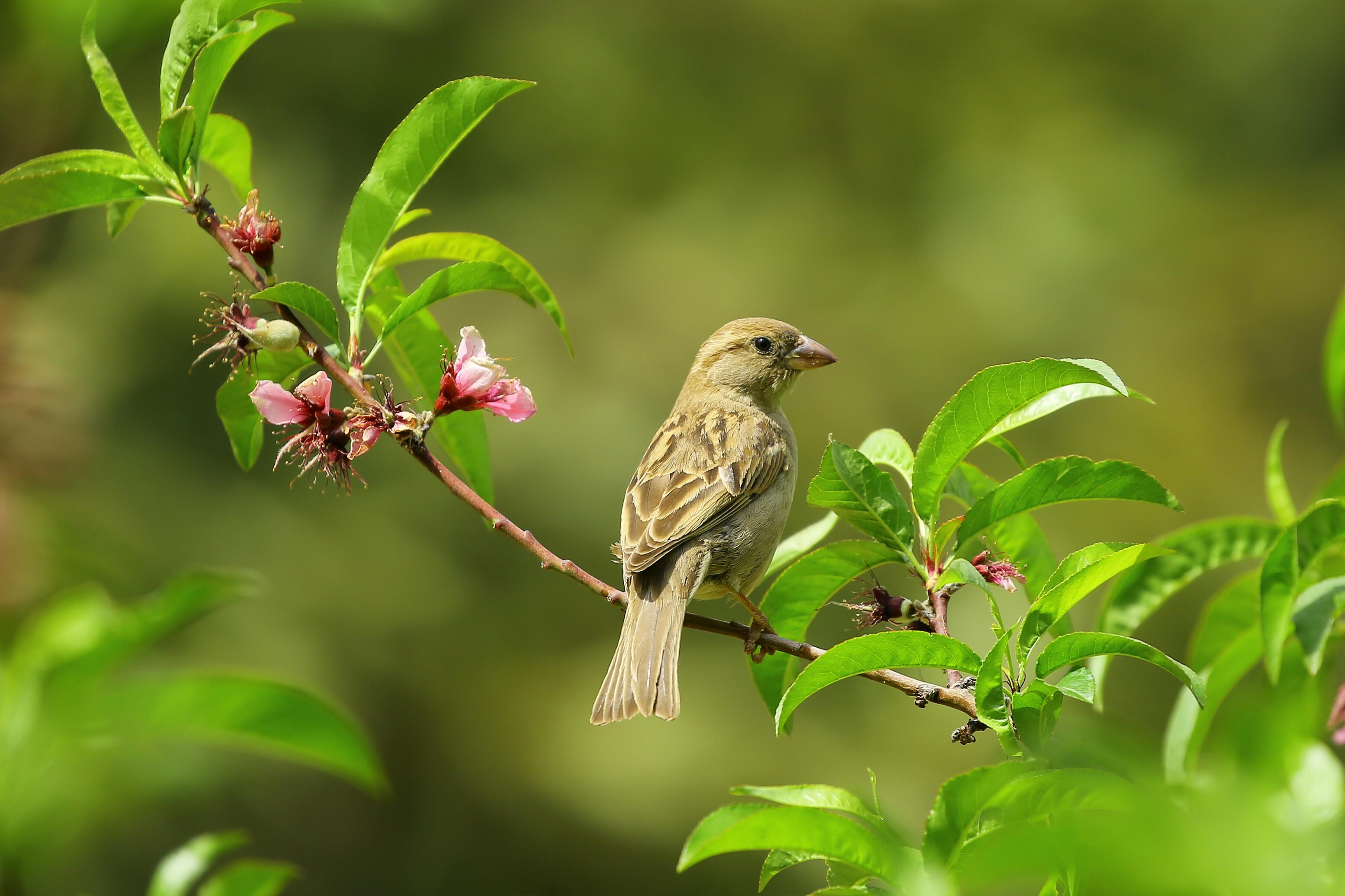 Samenwerking met de vogelbescherming